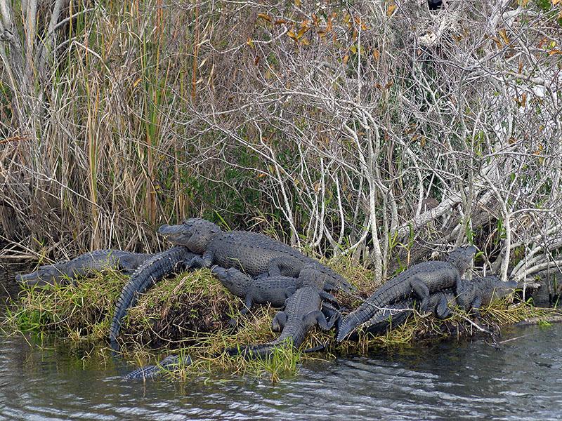 Hotels Everglades National Park Florida